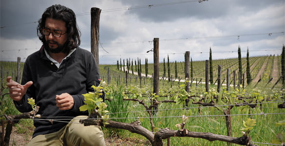 Stefano Amerighi among his Syrah vines