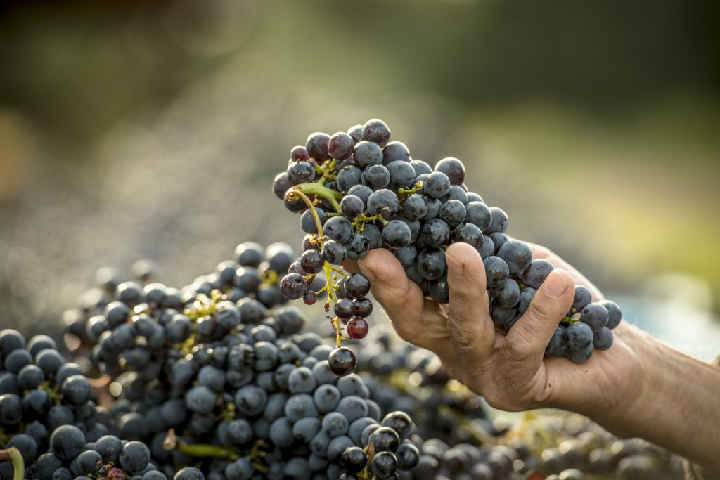 grapes in one hand